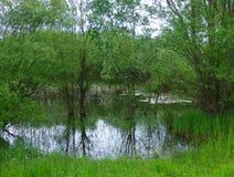 豪华的植被包围的小池塘 库存照片