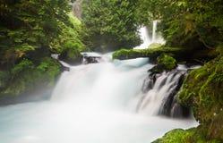 豪华的植被和光滑的水在McKenzie河,俄勒冈,美国 免版税库存照片