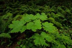 豪华的植被和厚实的草丛在黑暗的雨林 免版税库存图片