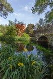 豪华的植被和纯净的水在Ninfa庭院  库存照片