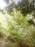 豪华的植被 免版税库存图片