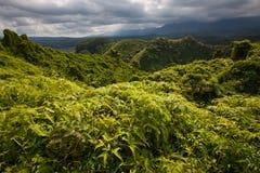豪华的热带森林,暴风云 库存图片