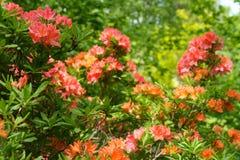 豪华的热带花灌木在森林 库存图片