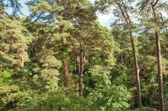 豪华的看的树木天棚在英国乡下 库存照片