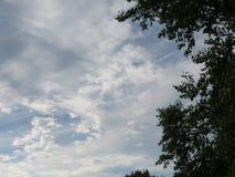 豪华的绿色树枝,作为对蓝天和graying云彩的一个对比 库存照片