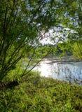 豪华的绿色植被包围的小池塘 免版税库存图片