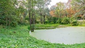 豪华的绿色沼泽 太阳通过厚实的叶子锐化显露一个华美的自然风景 库存图片