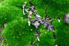 豪华的绿色青苔盖了石头 表面用narodami青苔报道 免版税库存图片