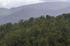 豪华的绿色风景和重的热带雨在加勒比 库存图片
