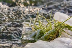 豪华的绿草逃过在一条冷漠的小河的冰冷的冬天 库存图片