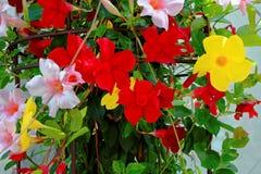 豪华的花篮子五颜六色的绽放 免版税库存图片