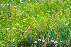 豪华的草和花 免版税库存照片