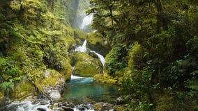 豪华的雨林瀑布 股票视频