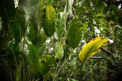 豪华的雨林 图库摄影