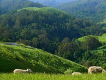 豪华的绿色山牧场地。 免版税库存照片