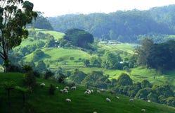 豪华的绿色山牧场地。 库存照片