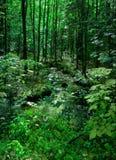 豪华的绿色森林&小河- Bridgton,缅因埃里克L 约翰逊摄影 免版税库存照片
