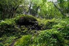 豪华的绿色植物看法,树、青苔和地衣在岩石围住wi 库存照片