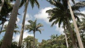 豪华的绿色热带森林 股票录像