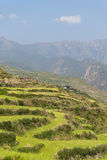 豪华的绿色露台的山领域 免版税库存照片