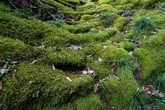 豪华的绿色青苔、地衣、植物、树和干叶子看法我 库存照片