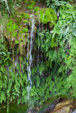 豪华的绿色青苔和植物围拢的瀑布 免版税库存照片