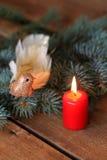 豪华装饰圣诞节小鸟 免版税图库摄影