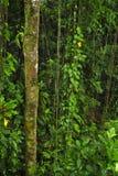 豪华,热带植物生活围拢雨林供徒步旅行的小道a 免版税库存图片