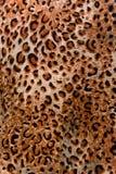 豹子样式纹理背景垂直 免版税图库摄影