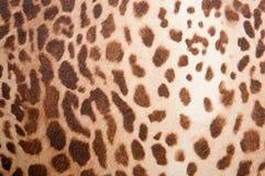 豹子模式纹理 库存图片