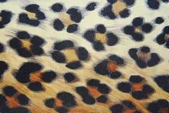 豹子模式 库存照片