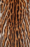豹子毛皮详细资料 免版税库存照片