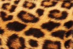 豹子皮肤地点 免版税库存图片