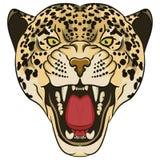 豹子画象 恼怒的野生大猫 库存照片