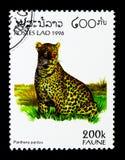 豹子(豹属pardus),动物区系serie,大约1996年 免版税库存图片