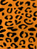 豹子skin1 免版税库存图片