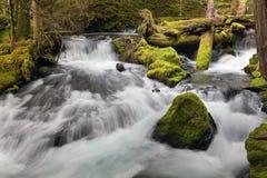 豹小河在华盛顿州 免版税库存照片