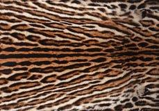 豹猫皮肤纹理 免版税库存照片