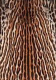 豹猫皮肤背景 库存图片