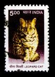 豹猫Prionailurus bengalensis,野生生物serie,大约2000年 免版税图库摄影