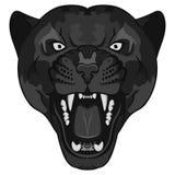 豹画象 恼怒的野生大猫 图库摄影