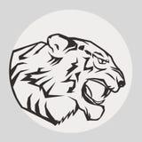 豹画象 恼怒的野生大猫 免版税库存照片