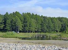 贝加尔湖森林和附庸国  库存图片