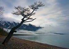 贝加尔湖 库存图片