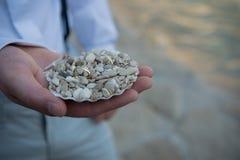 贝壳充满小小卵石阻止两个婚戒 库存照片