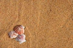 贝壳和沙子 免版税库存照片