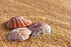 贝壳和沙子 免版税库存图片