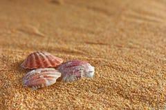 贝壳和沙子 免版税图库摄影