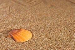贝壳和沙子 库存照片
