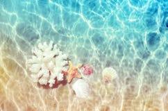 贝壳和海珊瑚在夏天海滩在海水 夏天背景 新的成人 免版税库存照片